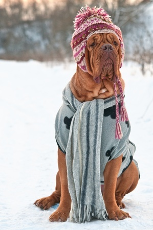 Warm large dog clothes