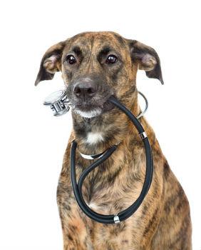 Large Dog Health