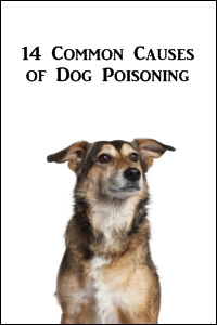 14 Common Causes of Dog Poisoning